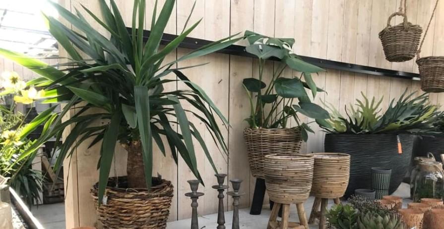 Kamerplanten de bruijn