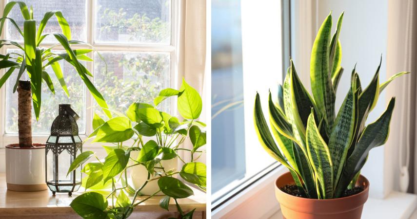 Kamerplanten die in de volle zon kunnen staan
