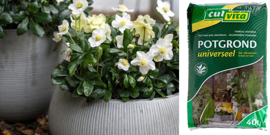 kwekerspotgrond-kopen-tc-de-bruijn