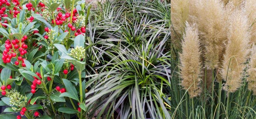 Najaars tuinplanten - De Bruijn