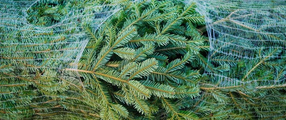 Nordmann kerstboom - De Bruijn