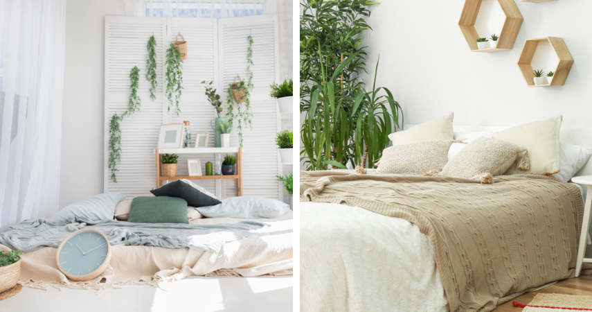 Slaapkamer planten voor een goede nachtrust