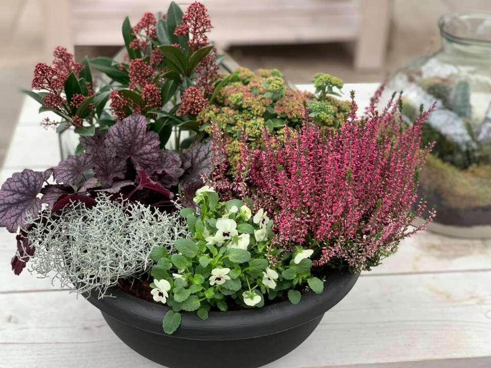 Najaarsplanten - De Bruijn