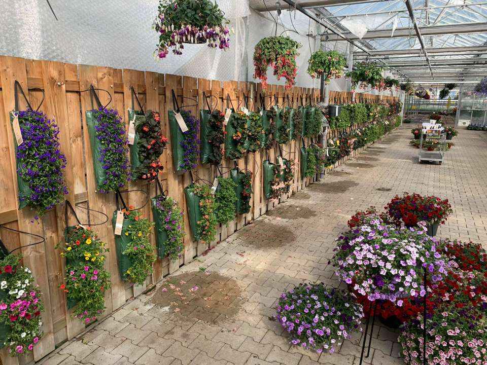 Tuincentrum De Bruijn tuinplanten