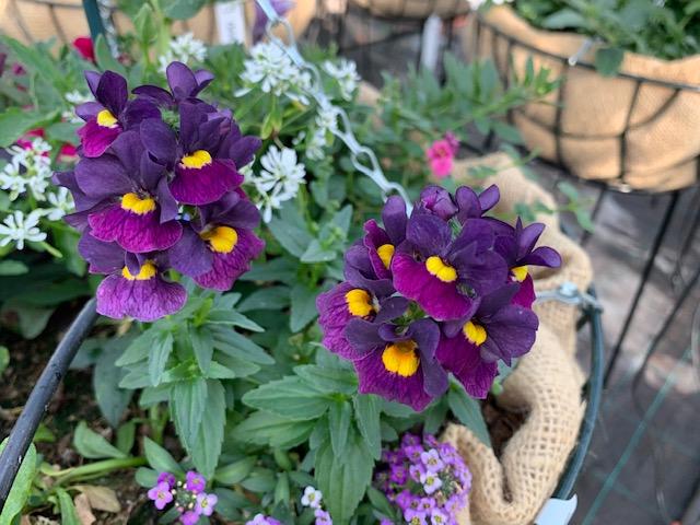 Zomerbloeiers-vrolijk-kleuren